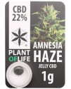 CBD Solid Amnesia 20%