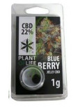 CBD Solid Blueberry 20%