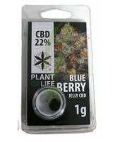CBD Solid Blueberry 20%
